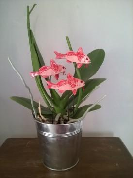 Rougets et orchidée